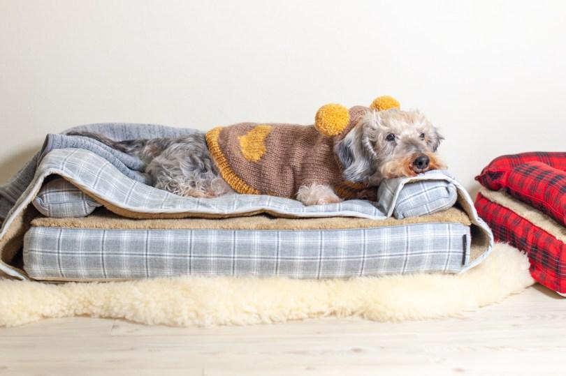 ベッドカバー&モグラー「サイラス」、 犬の洗える日本製ベッド:ロイヤルベッド - アンベルソ