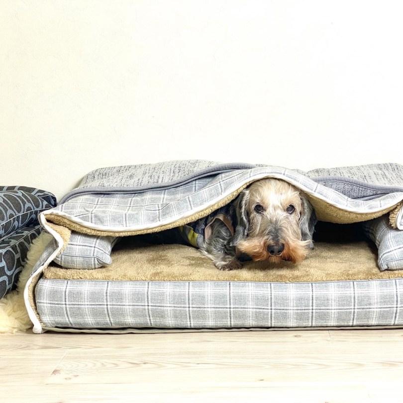 クッション付きベッドカバー:サイラス、モグラー:サイラス、ブランケット:ケイリー