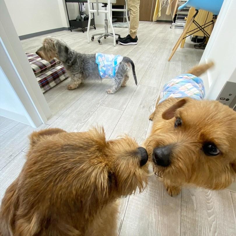 グルーミングサロン Richtail 犬のベッド:アンベルソ