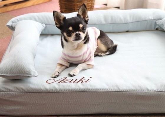 チワワのあずきちゃん9歳|犬のベッド:アンベルソ