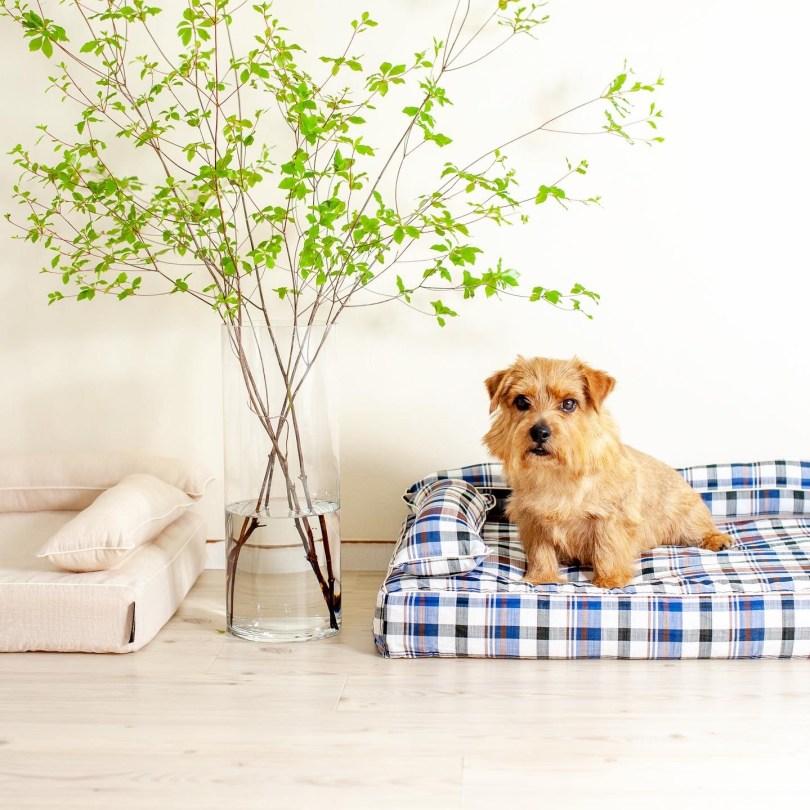 クッション付きベッドカバー:ジュリオ|犬のベッド:アンベルソ