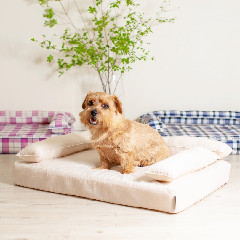 クッション付きベッドカバー:オーガニックサマーレイ|犬のベッド:アンベルソ