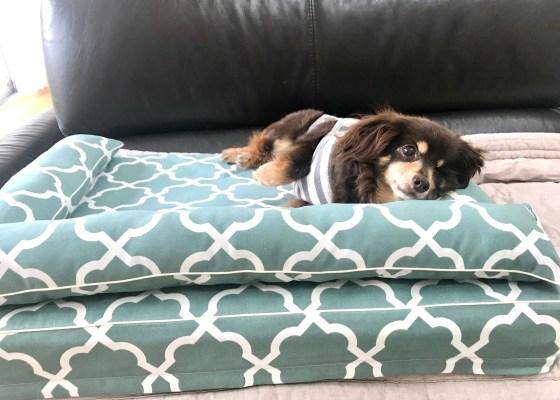 チワックスのめがねちゃん14歳|犬のベッド:アンベルソ