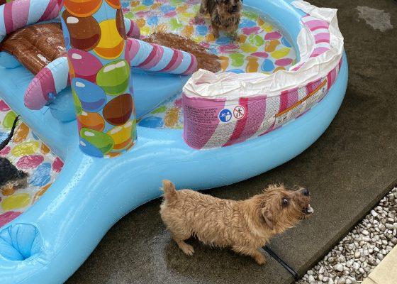 プール|犬のベッド:アンベルソ