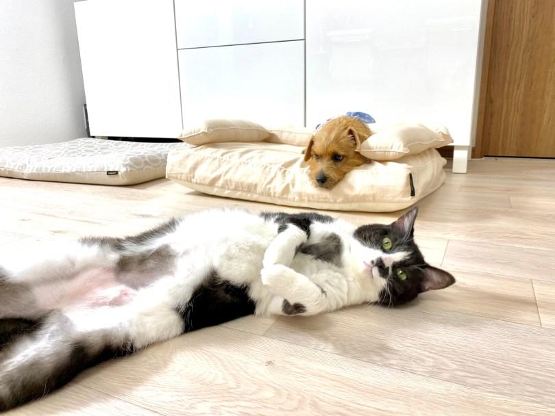 ANBERSO® STORE(アンベルソ・ストア)|犬のベッド:アンベルソ