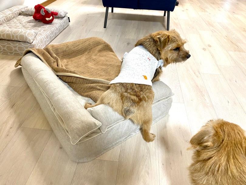 クッション付きベッドカバー:アリス【オートミール】|犬のベッド:アンベルソ