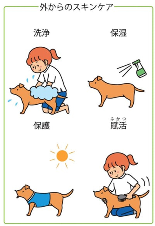 獣医師がオススメするスキンケアの4つのポイント|犬のベッド:アンベルソ