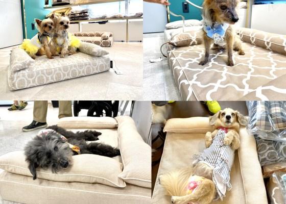 ロイヤルベッドお試し会|犬のベッド:アンベルソ