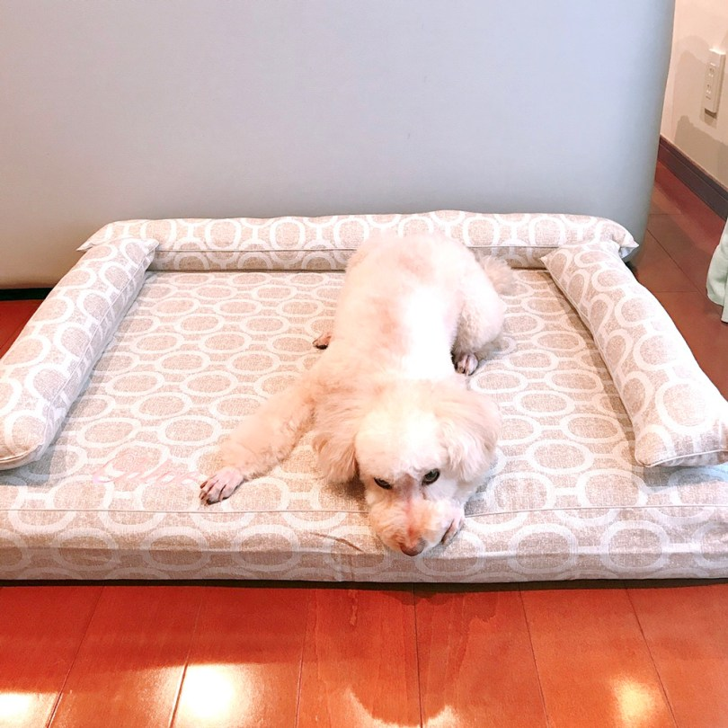 トイプードルのクロエちゃん7歳 犬のベッド:アンベルソ