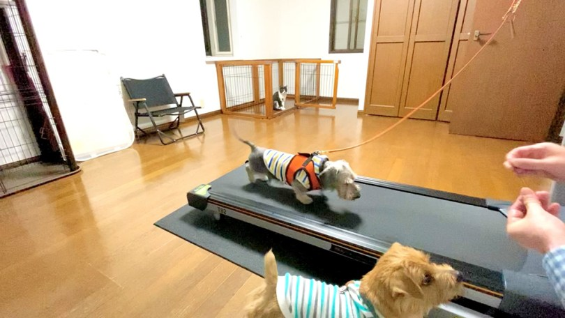 トレッドミル・トレーニング 犬のベッド:アンベルソ