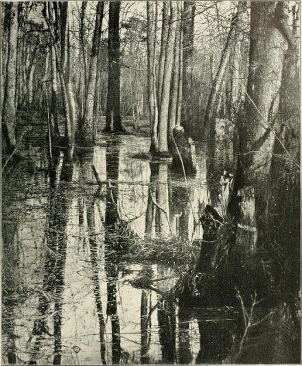 Civil War swamp battlefield