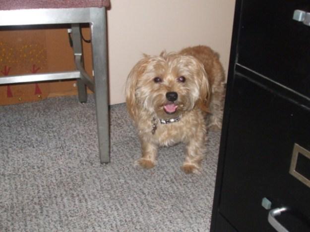 My dog Bogie