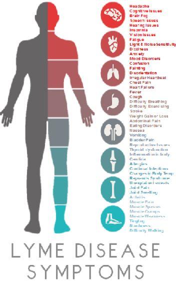lyme-disease2