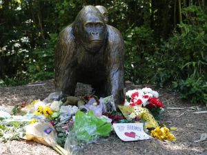 636002281993491230-gorilla.memorial2