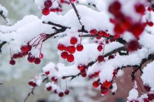 snow_hope-3