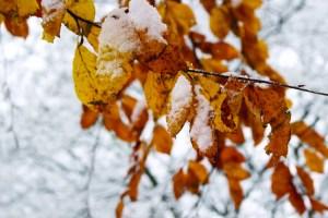 snow_hope-6