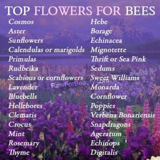 top flowers for the bees