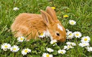 Image result for rabbit in a meadow