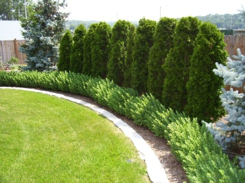 Amazing Privacy Fence Ideas to Perfect Your Backyard 13