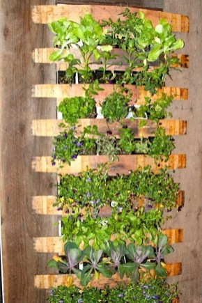 Stunning DIY Vertical Garden Design Ideas 25