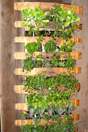 Stunning DIY Vertical Garden Design Ideas 25