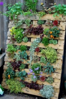 Stunning DIY Vertical Garden Design Ideas 30