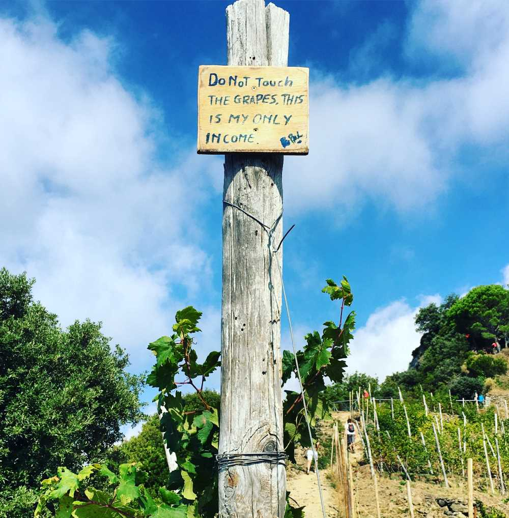 """A sign that says """"Do Not Touch The Grapes, This Is My Only Income."""" This sign is posted along a hiking trail."""