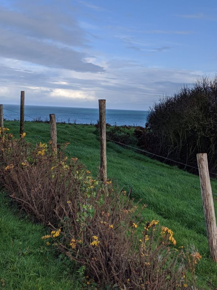 A fence post and flowers on the cliffs near Omaha Beach in Normandy.