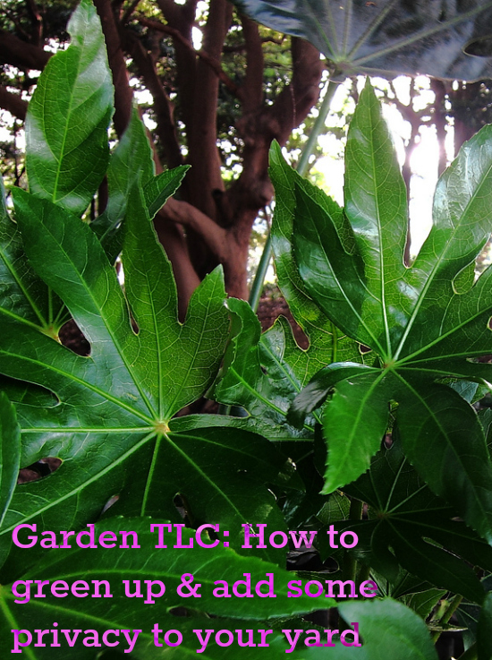 More Garden TLC: How to green up & add some privacy to your yard