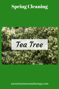 Tea Tree Spring Cleaning