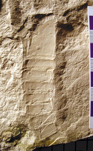 The eurypterid found by Ed Dobrzanski and me in 2004 (collection of The Manitoba Museum)