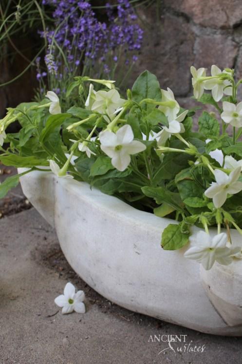 trouvais-summer-plantings-copy