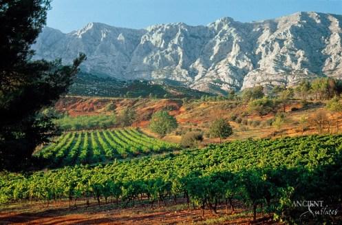 france-provence-vineyard-copy