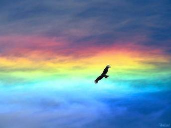 大空を舞う鷲