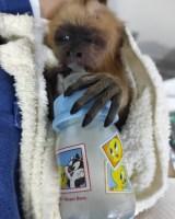 Evento 'ANDA – Bem Animal' reúne mais de mil pessoas em SP
