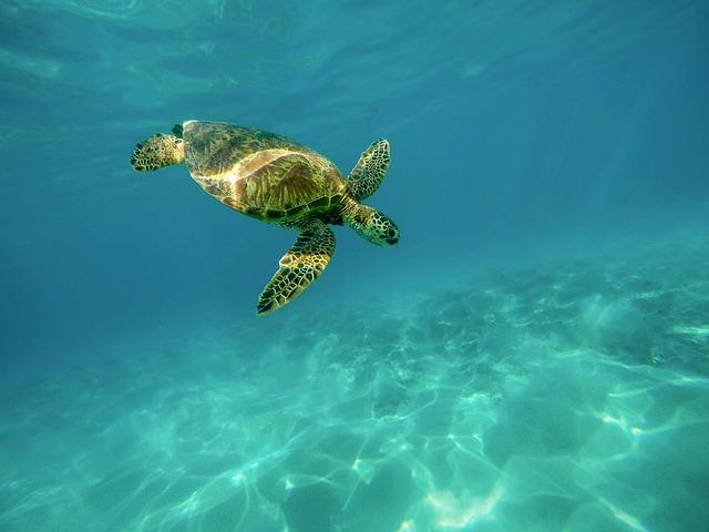 Na imagem, uma tartaruga marinha. COP15 discute a preservação dos oceanos e das terras para frear as mudanças climáticas originadas pela ação humana