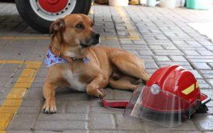 Cão foi adotado pelo Corpo de Bombeiros no RS