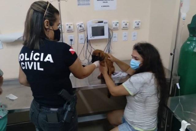 Cão teve rabo cortado com faca e sem preparo, segundo polícia; tutor foi preso em Belém por maus-tratos