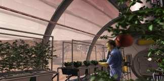 efectos de la gravedad de Marte en el crecimiento de las plantas