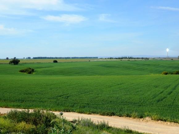 tour da Siviglia a Cordoba - Spunta la torre del campo fotovoltaico dalla pianura sivigliana.