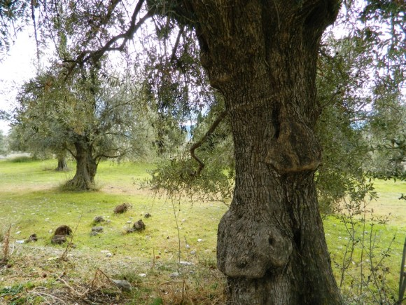 Olio Oliva Andalusia cosa mangiare