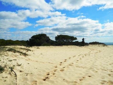Cavallo_andalusia_doñana_spiaggia_mazagon