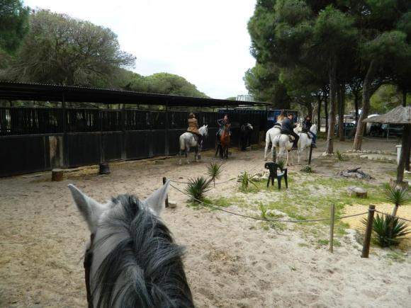 Cavallo_andalusia_passeggiata