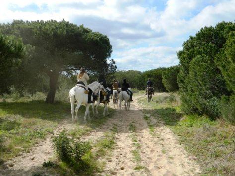 cavallo_pineta_andalusia_mazagon_doñana