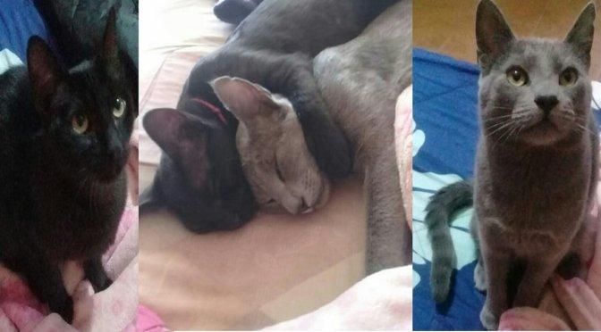 Mascotas desamparadas tiene nuevo hogar tras la muerte de su dueña victima por covid