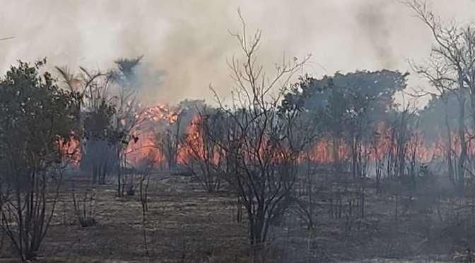 El fuego arrasa con 4.000 hectáreas del Parque Noel Kempff Mercado