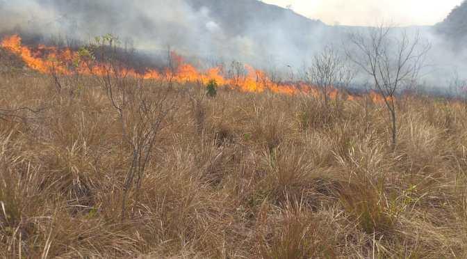 Estiman que 1.500 hectáreas ya fueron afectadas por el fuego en Villa Montes