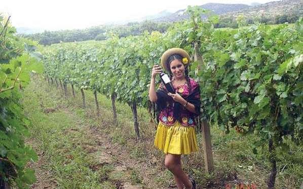 Contrabando afecta al sector vitivinícola y cervecería