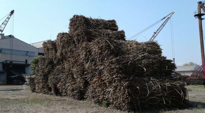Productores cañeros pedirán al nuevo gobierno solución al problema agroindustrial