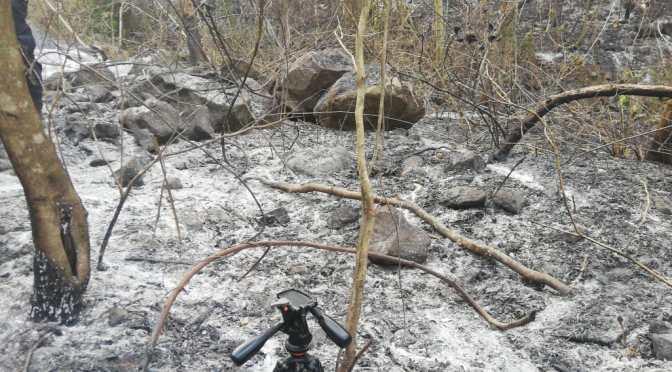 Aprehenden al que provocó incendio de magnitud en el Aguarague